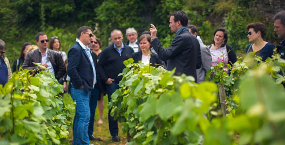 Extranet bivb : bureau interprofessionnel des vins de Bourgogne