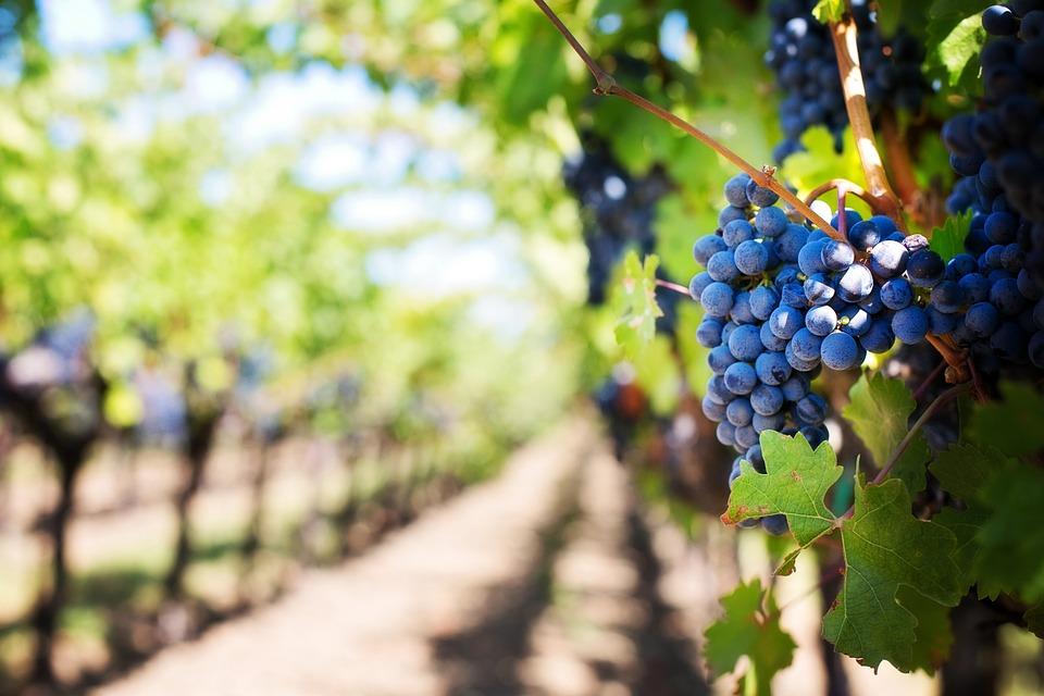 Les dix choses à savoir sur le vin de Bourgogne