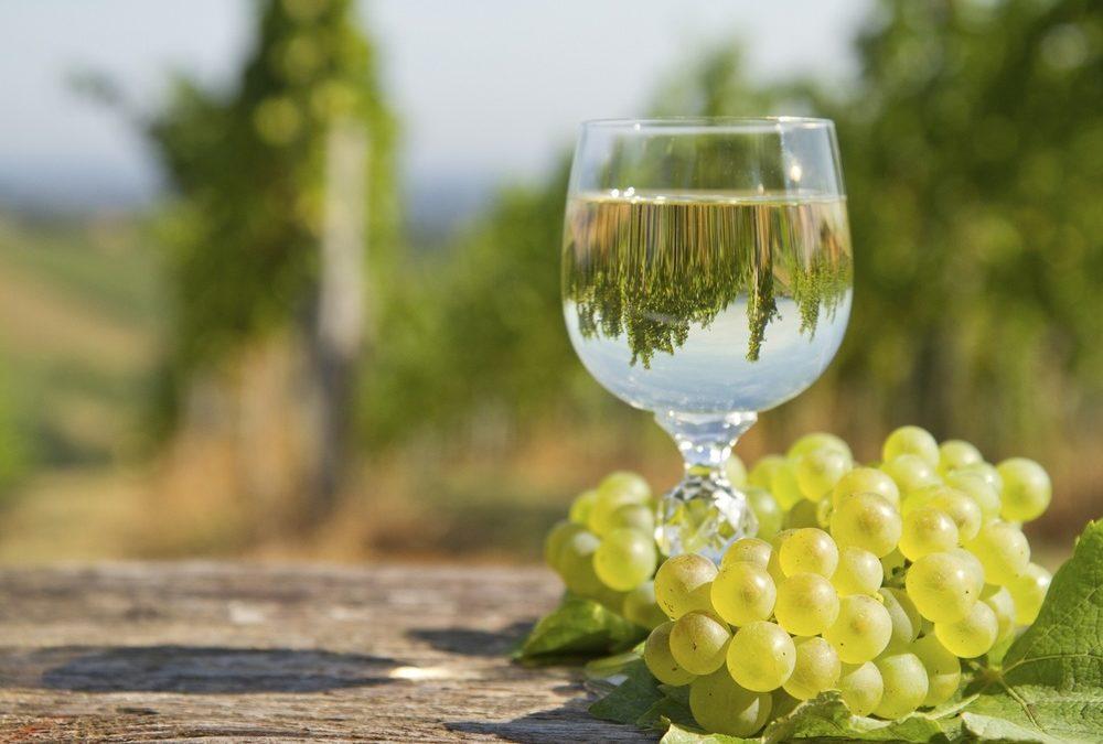 Tout savoir sur les vins d'Alsace