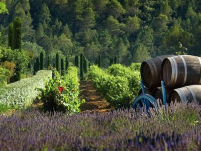 Les meilleurs destinations en France pour le vin