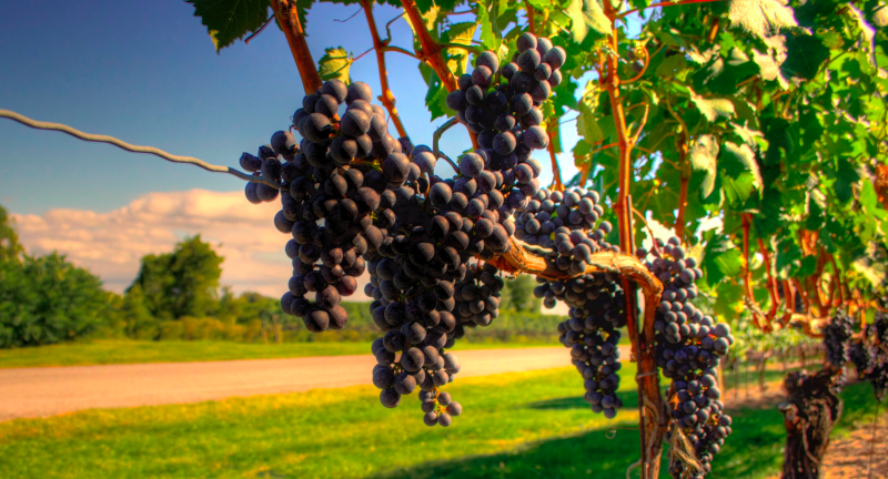 Les cinq meilleurs types de vins rouges français
