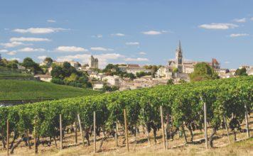 Les meilleurs expériences autour du vin dans le sud de la France