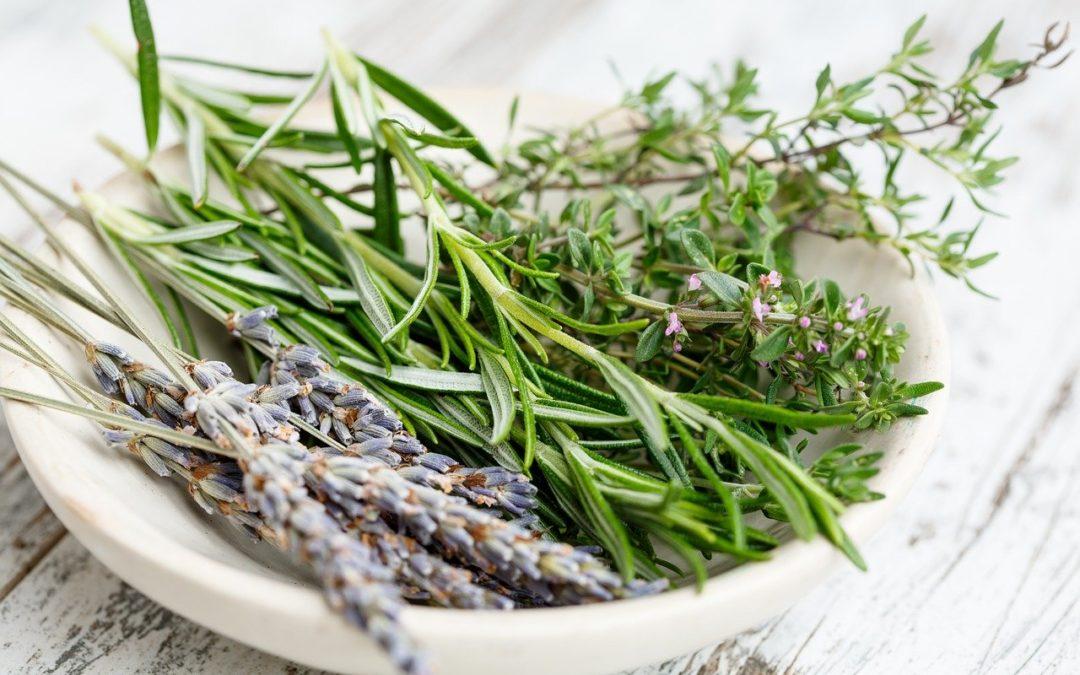Cerfeuil ou autre herbe aromatique : Quels vins pour quelles herbes ?