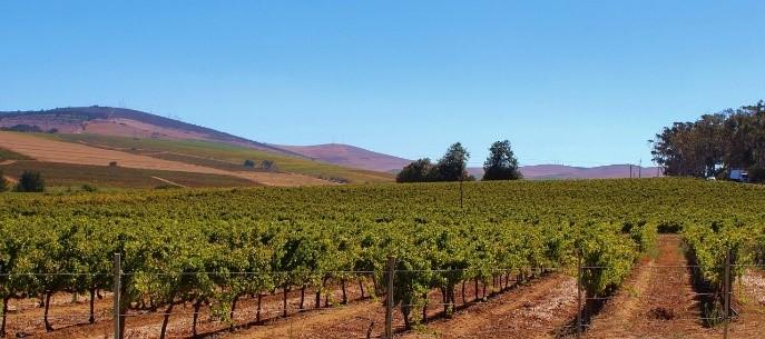 Investissement dans un groupement foncier viticole : un excellent projet ?