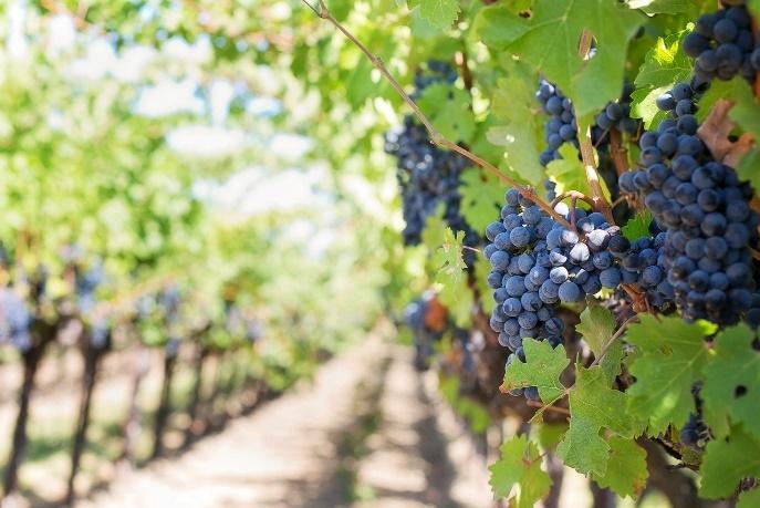 Pourquoi choisir du vin biodynamique, biologique ou nature?