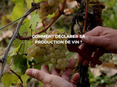 Déclarer votre production viticole auprès de la Douane