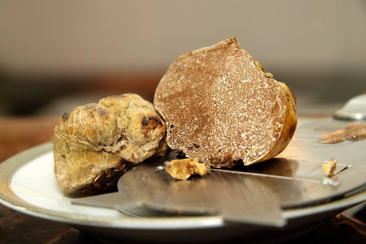 recettes de truffes blanches