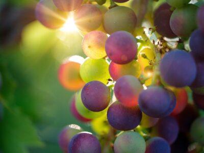 Qu'est-ce que l'appassimento dans la vinification ?